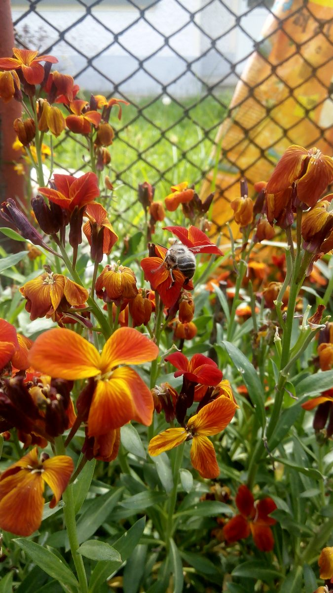 Bee 🐝 lovely ❤
